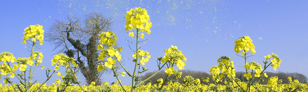 Hay fever tips to ease symptoms in children & adults