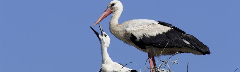 Delivery By Stork